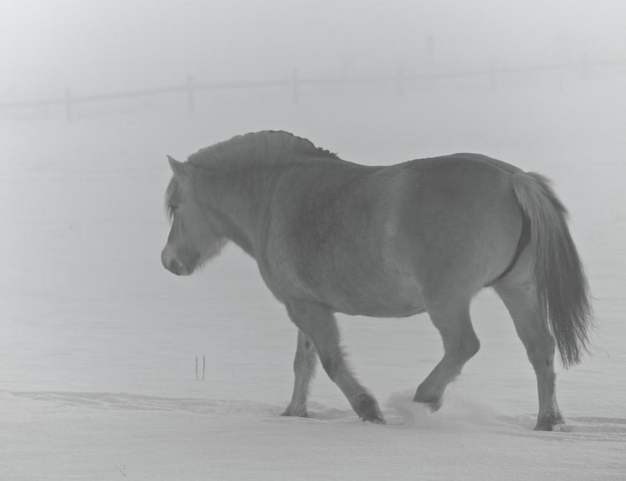 Horse Photograph - Spirit Two by Odd Jeppesen