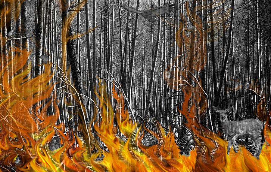 Trees Photograph - Spirits Of The Firestorm by Diane C Nicholson
