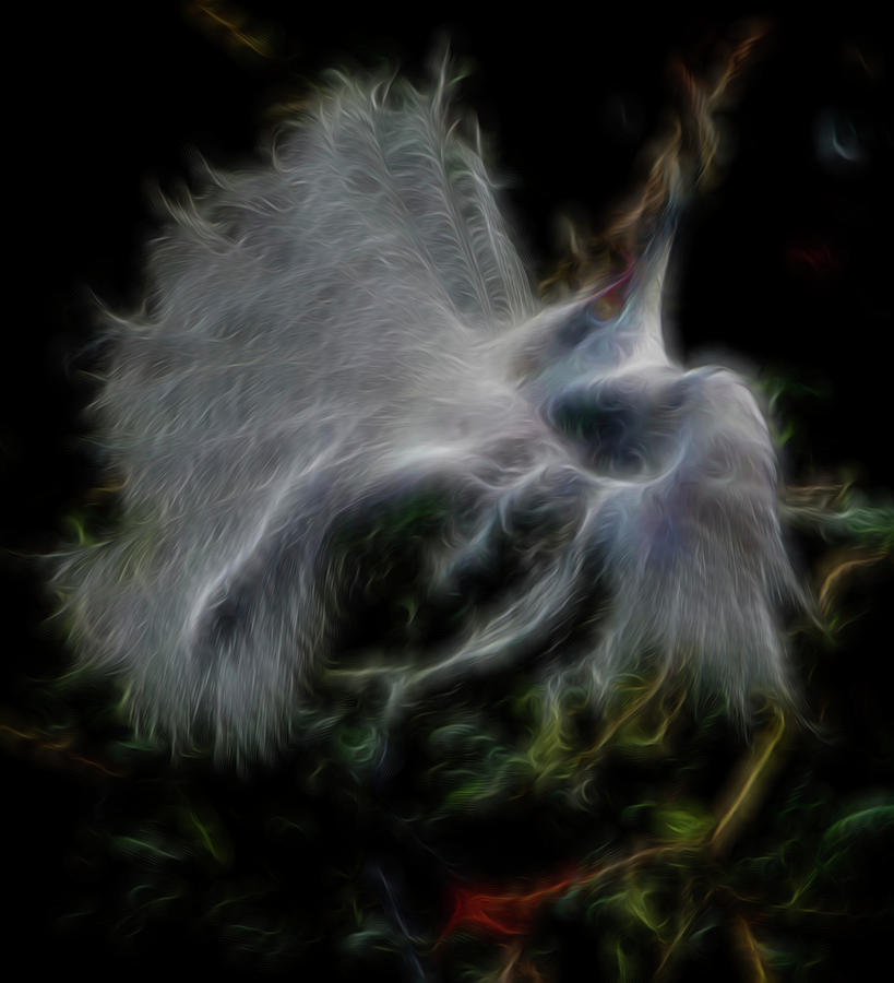 Abstract Digital Art - Spiritual Plumage by William Horden