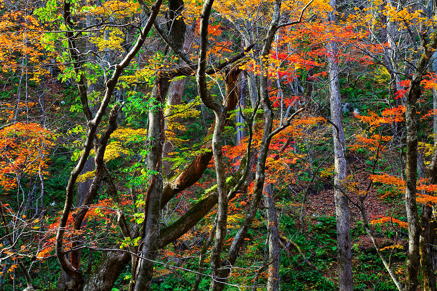 Splash of Autumn by Brad Brizek
