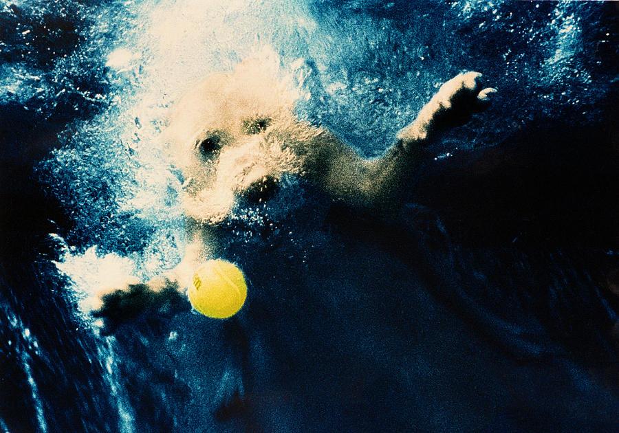 Dog Photograph - Splashdown by Jill Reger