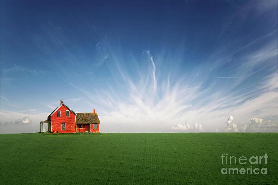 Splendid Isolation Photograph