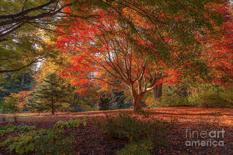 Fall Photograph - Splendor Of Autumn At Biltmore by Dale Powell