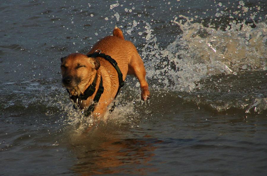 Dog Photograph - Splish Splash I Was Taking A Bath by Martina Fagan