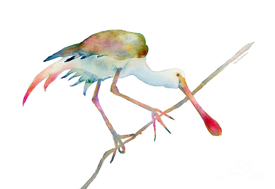 Watercolor Painting - Spoonbill  by Amy Kirkpatrick
