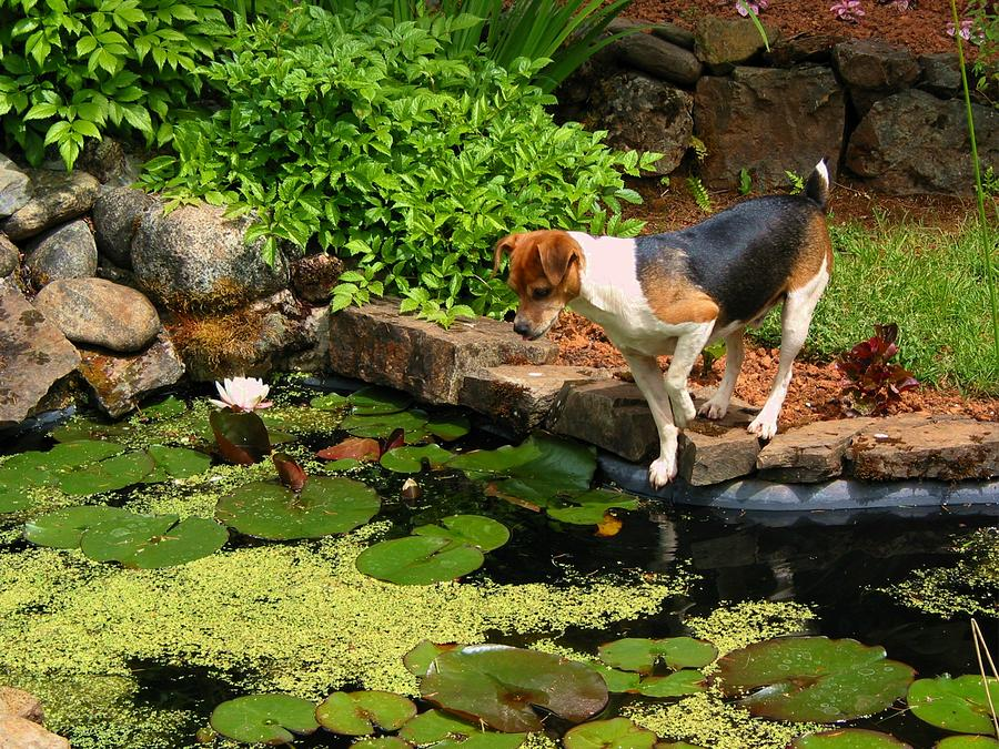 Dog Photograph - Sporty At The Lily Pond by Susan Lindblom
