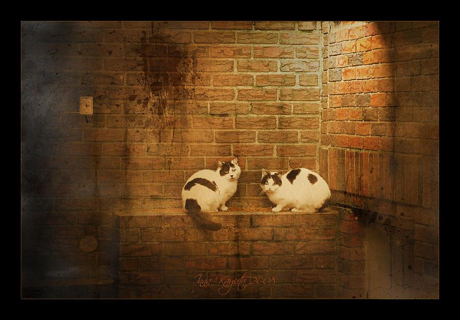 Cats Photograph - Spotlight by Inesa Kayuta