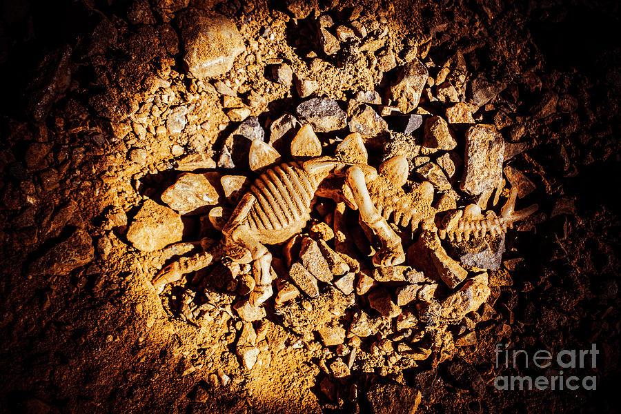 Stegosaurus Photograph - Spotlight On A Extinct Stegosaurus by Jorgo Photography - Wall Art Gallery