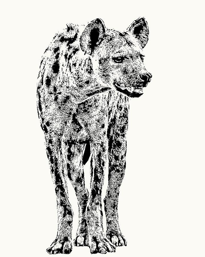 Hyena Photograph - Spotted Hyena Full Figure by Scotch Macaskill