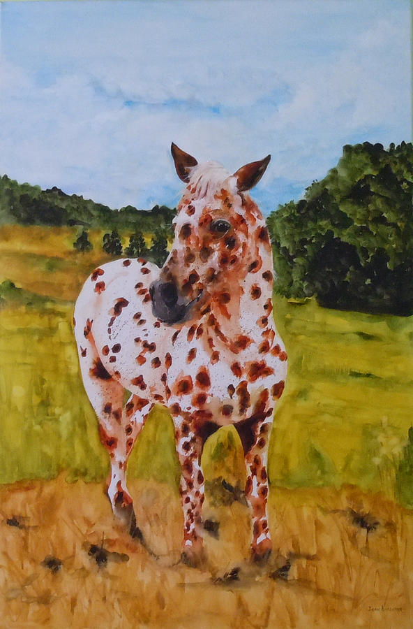 Horse Painting - Spotted in Hawaii by Jean Blackmer