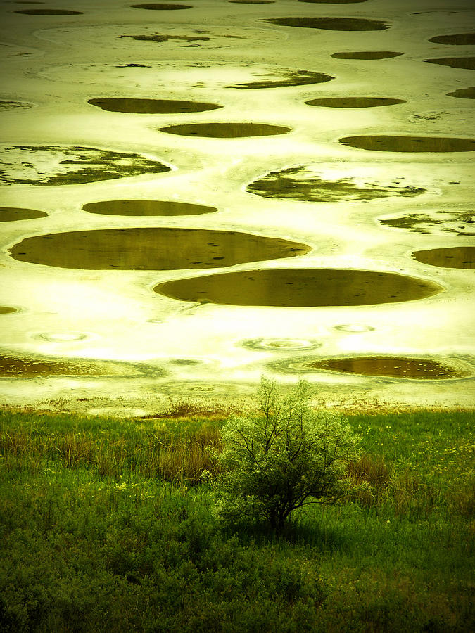 Spotted Lake Photograph - Spotted Lake by Tara Turner