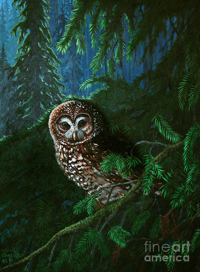 Owl Painting - Spotted Owl In Ancient Forest by Nick Gustafson
