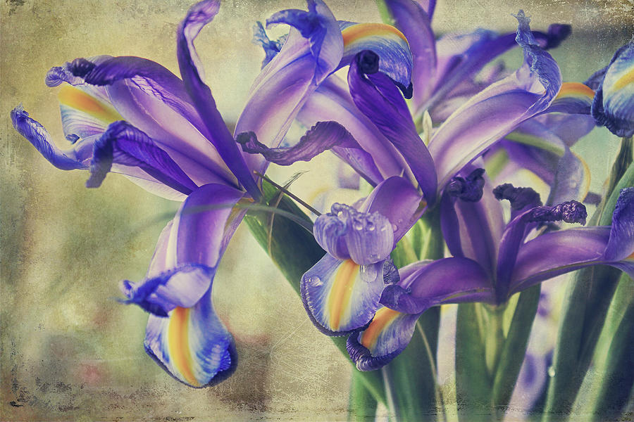 Iris Photograph - Spread Love by Laurie Search
