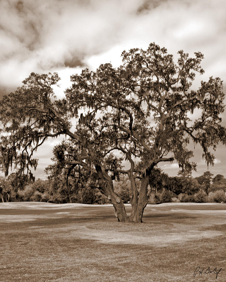 Clouds Photograph - Spreading Tree by Phill Doherty
