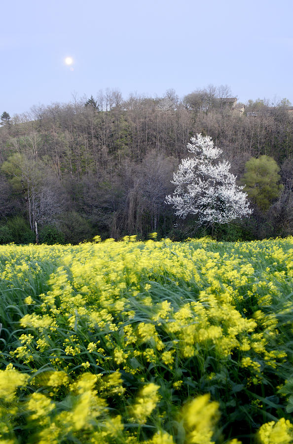 Flowering Photograph - Spring by Andrea Gabrieli
