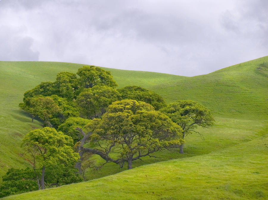 Landscape Photograph - Spring At Del Valle by Karen  W Meyer