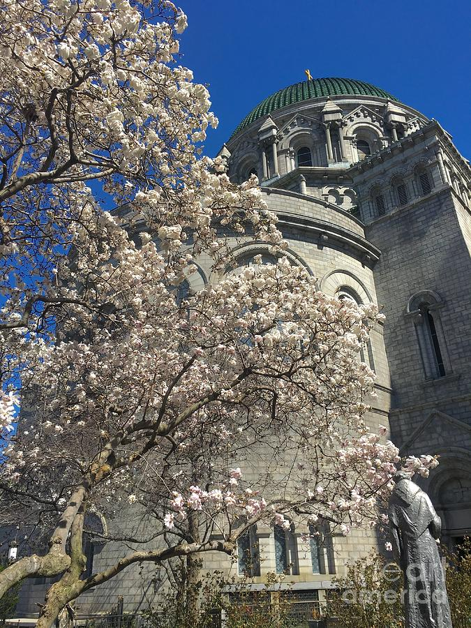 Spring at the Cathedral Basilica 0316 by Debbie Fenelon