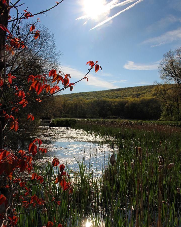 Landscape Photograph - Spring Awakening by Jason Nicholas