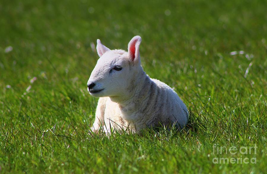 Spring Baby Photograph