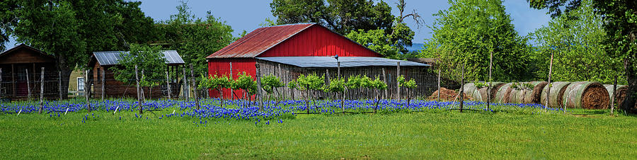 Spring Beauty in the Hill Country Panorama by Lynn Bauer