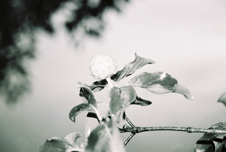 Flower Photograph - Spring Bloom by Jessica Burgett
