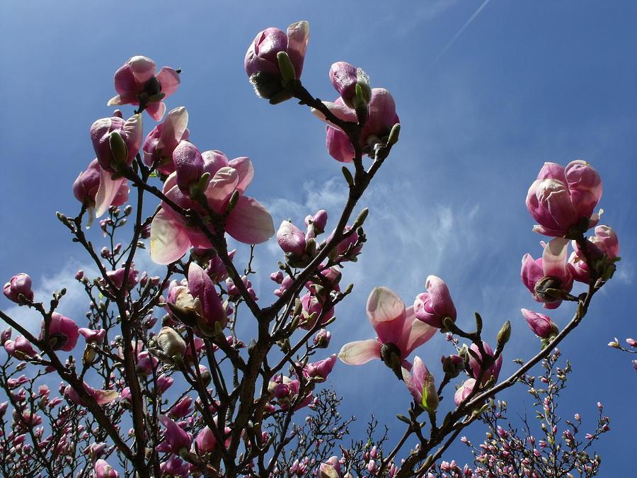Spring Photograph - Spring Blooms 2010 by Anna Villarreal Garbis