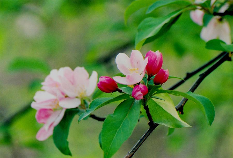 Spring Photograph - Spring Blossom by Juergen Roth
