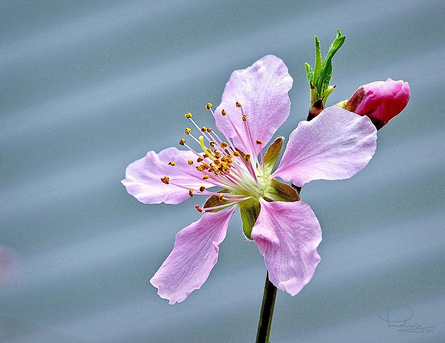 Spring Blossom by Ludwig Keck