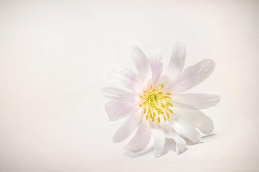 Spring Blossom Photograph