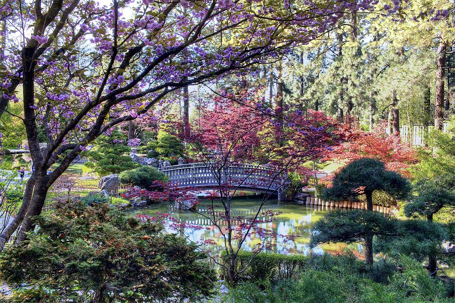 Japanese Garden Photograph - Spring Blossoms by Craig Smith