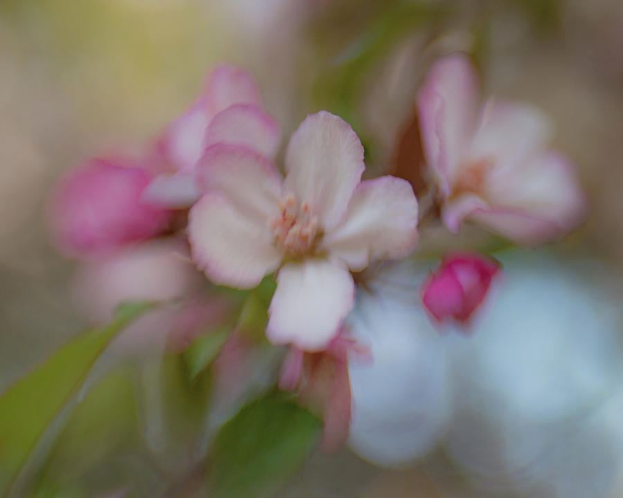 Spring Blossoms 2 by Pamela Taylor
