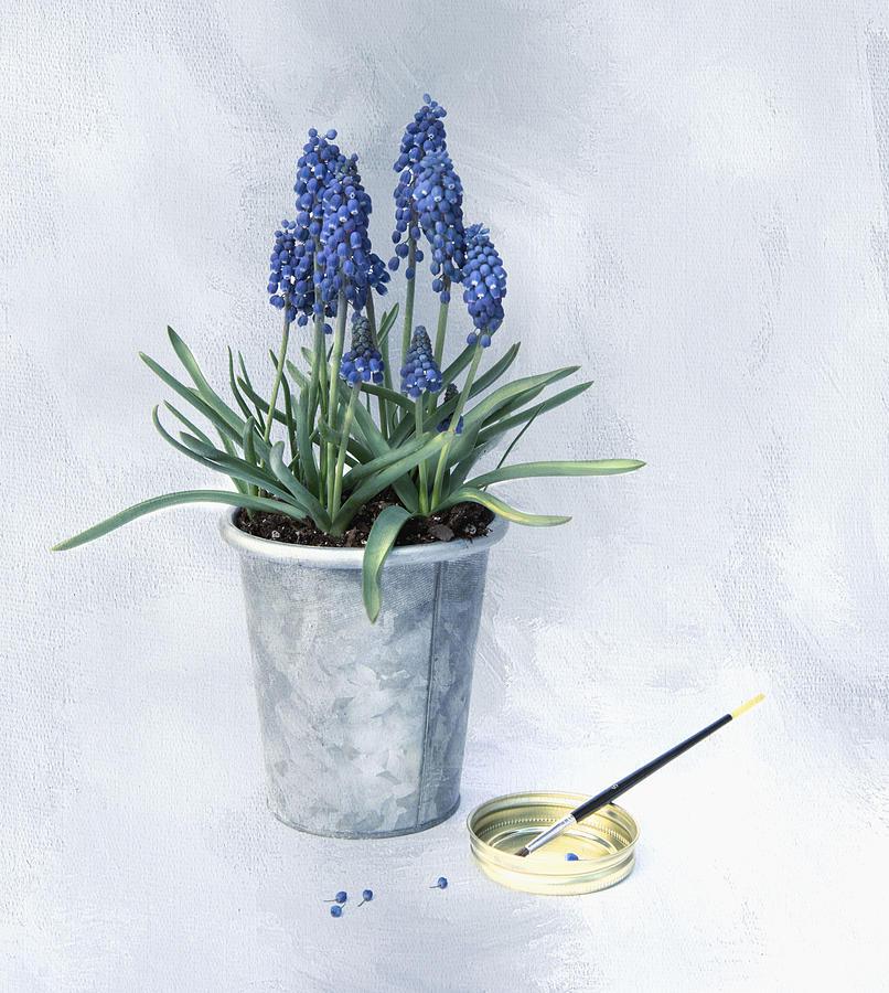 Spring Blue by Robin-Lee Vieira