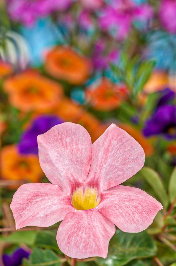 Bouquet Photograph - Spring Bouquet by Louis Rivera