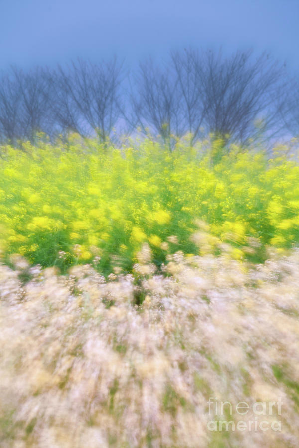 Season Photograph - Spring Breeze by Awais Yaqub