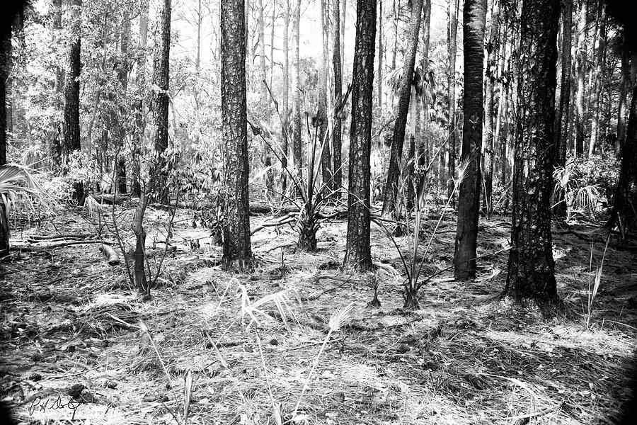 Hunting Island Photograph - Spring Burn  by Phill Doherty
