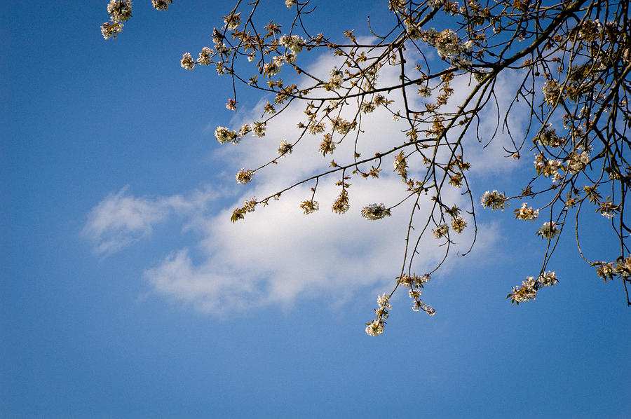 Blossom Photograph - Spring Cloud by Andy Smy