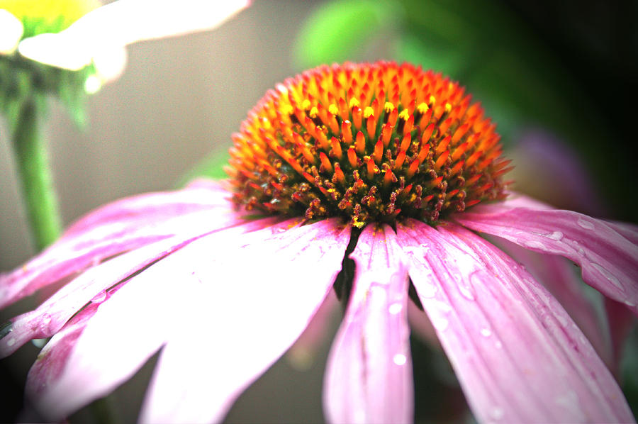 Flowers Photograph - Spring Colors by Becca Brann