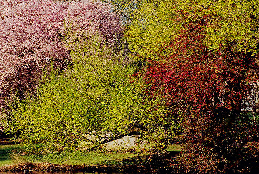 Bright Photograph - Spring Colors by Juergen Roth