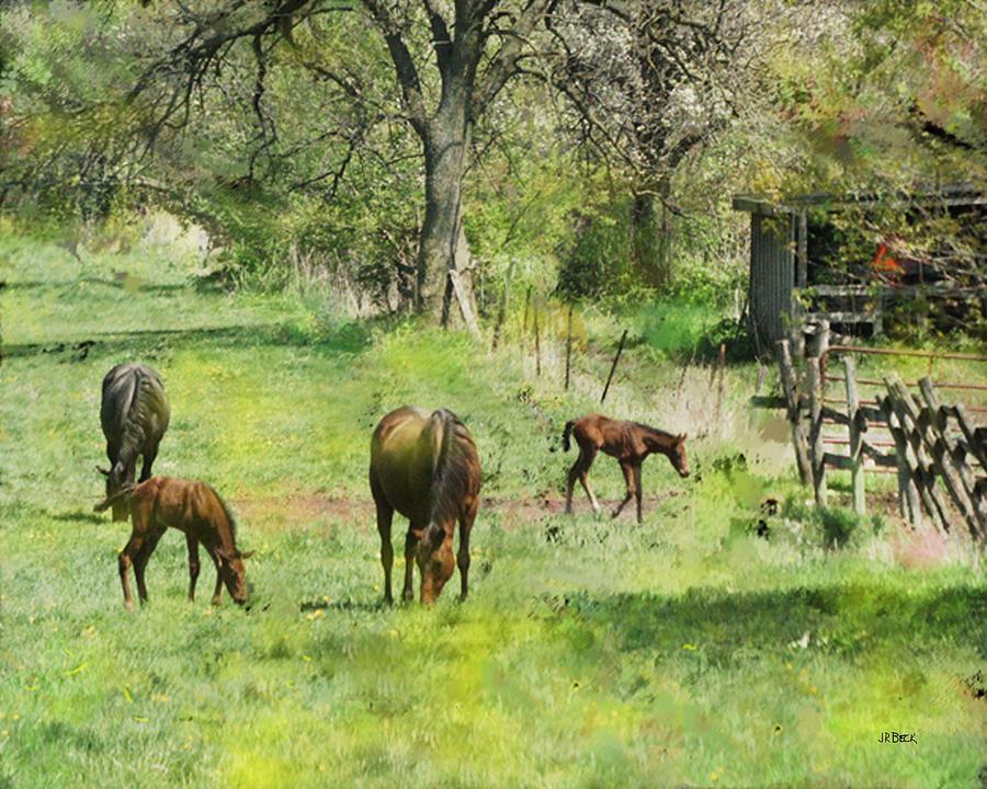Horses Digital Art - Spring Colts by John Beck