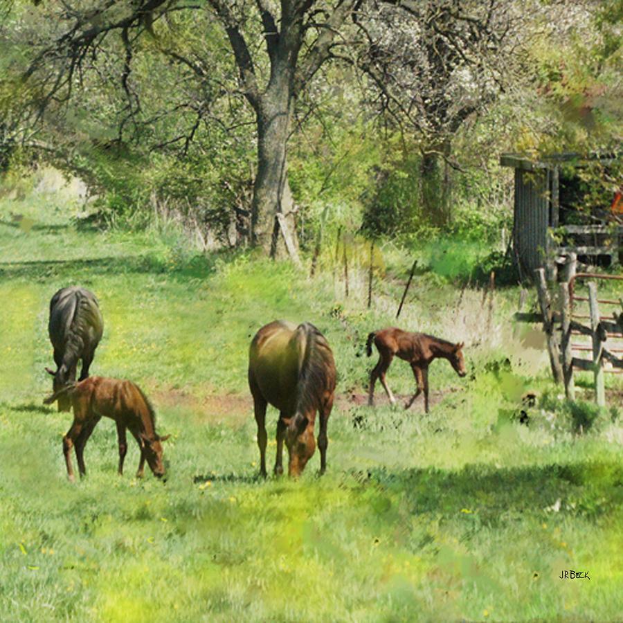 Horses Digital Art - Spring Colts - Square Version by John Robert Beck