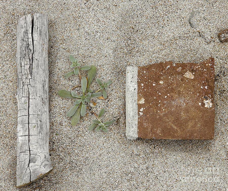Sand Photograph - Spring Comes by Viktor Savchenko