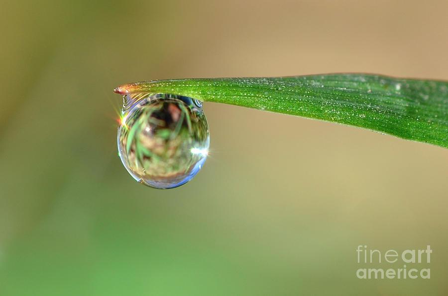 Spring Dew by Katie Joya