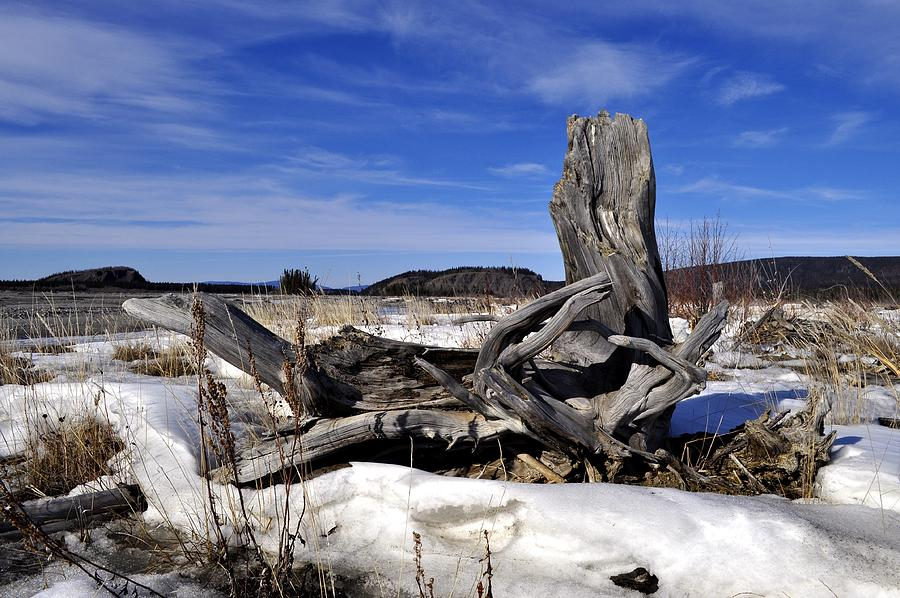 Driftwood Photograph - Spring Driftwood by Cathy Mahnke