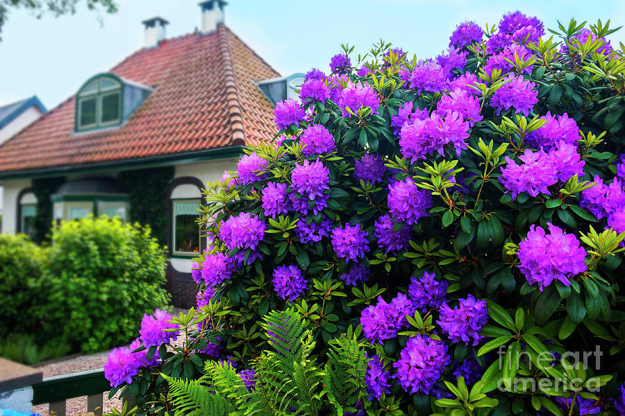 Architecture Photograph - Spring  Dutch Garden  by Ariadna De Raadt