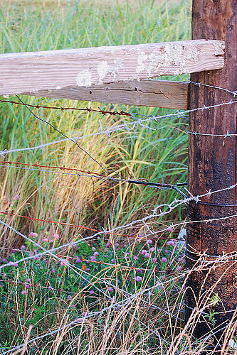 Spring Fence And Flowers Photograph by Amy LeBlanc