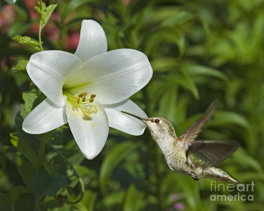 Floral Photograph - Spring Fling by Chuck Brittenham