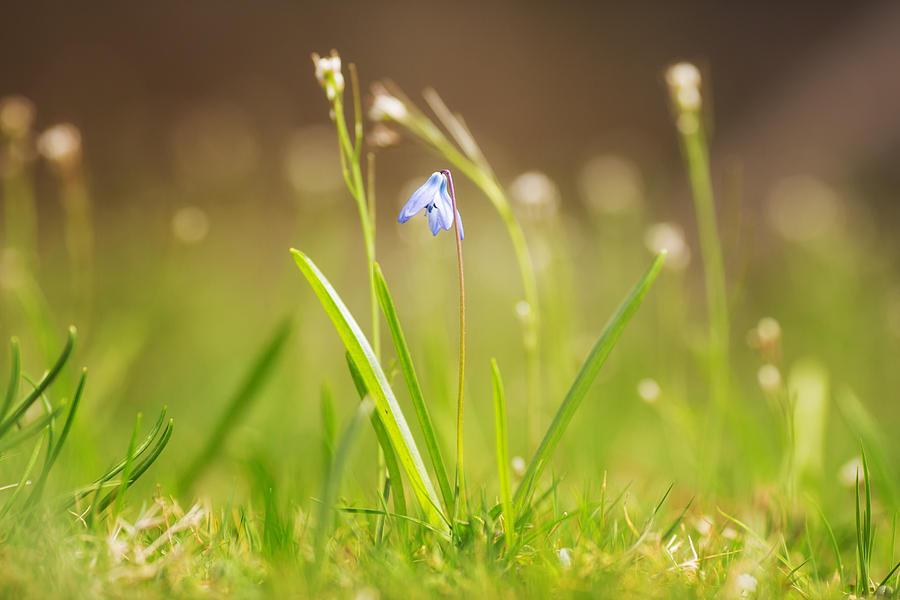 Spring Flower 2 Photograph