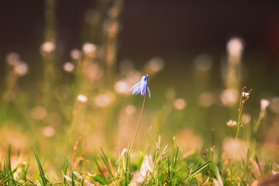 Spring Flower 3 Photograph