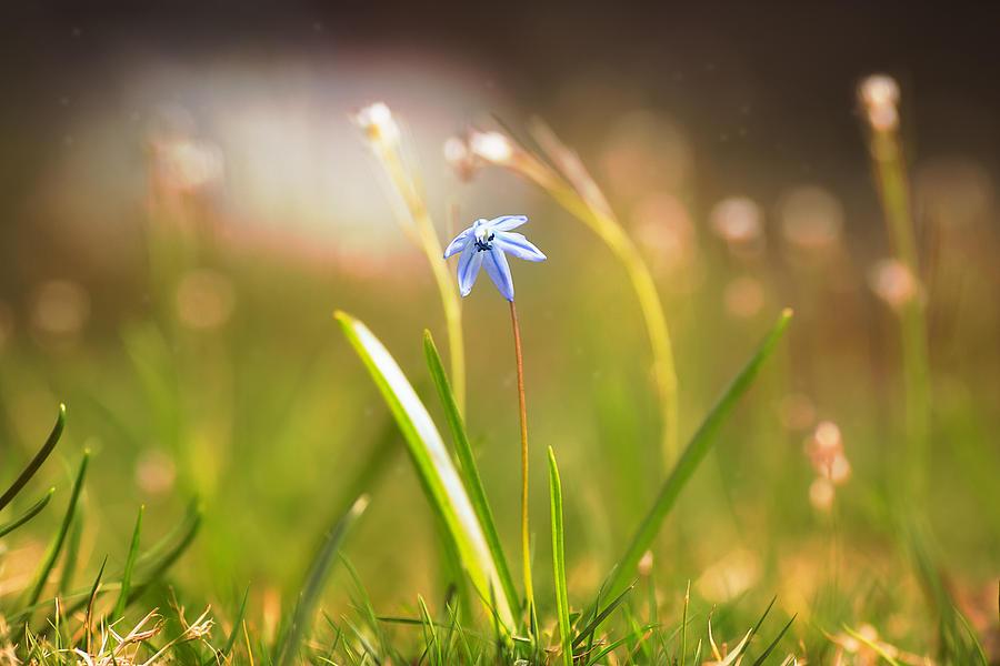 Spring Flower 4 Photograph