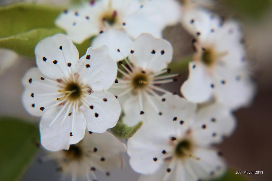 Spring Photograph - Spring Flower 8 by Joel Meyer